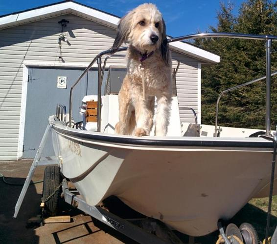 17ft Boston Whaler. 90hp. Trailer & Accessories Included.
